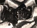 Pierwszy miot ogarów, osiem sztuk, rodzice Hałas i Lora zostały skradzine jak szczenięta miały 14 dni. Małe były karmione strzykawkami i cumlami. Wszystkie osiem sztuk zotało odchowane i rozprowadzone wśród myśliwych.