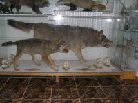 Czytaj więcej: Muzeum Łowieckie Łuczakówka